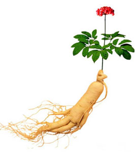 Ginseng plant and roots