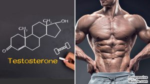 Testosterone, Sex Drive & Muscle Building – Know Your Place!